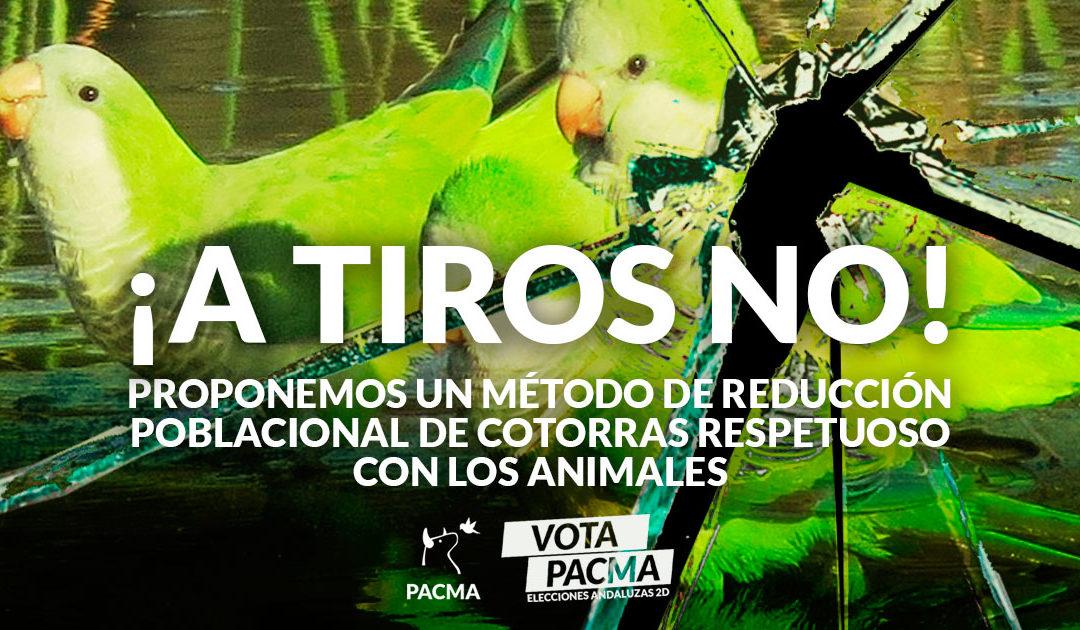 PACMA presenta en Málaga un plan para el control ético de cotorras