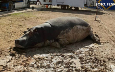 Lamentable estado de los animales del circo Roma Dola en Granada