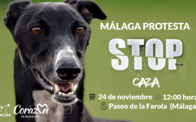 Acto performance en Málaga: ¡No a la caza!